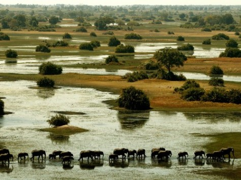 Botswana-Elephants-in-the-Okavango-Delta-Photo-by-Dana-Allen-for-Wilderness-Safaris-500x375
