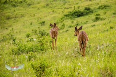 Vrijwilligerswerk Zuid Afrika - Volunteer South Africa - Safari - Game drive-11
