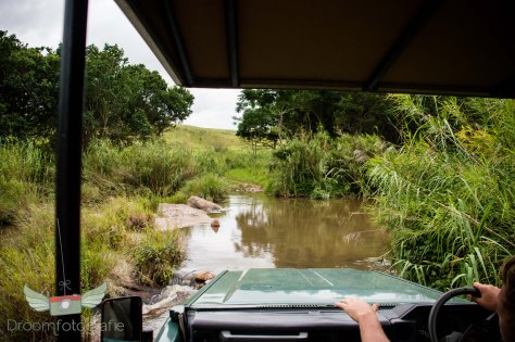 Vrijwilligerswerk Zuid Afrika - Volunteer South Africa - Safari - Game drive-14