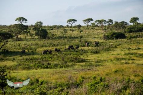Vrijwilligerswerk Zuid Afrika - Volunteer South Africa - Safari Hluhluwe-66